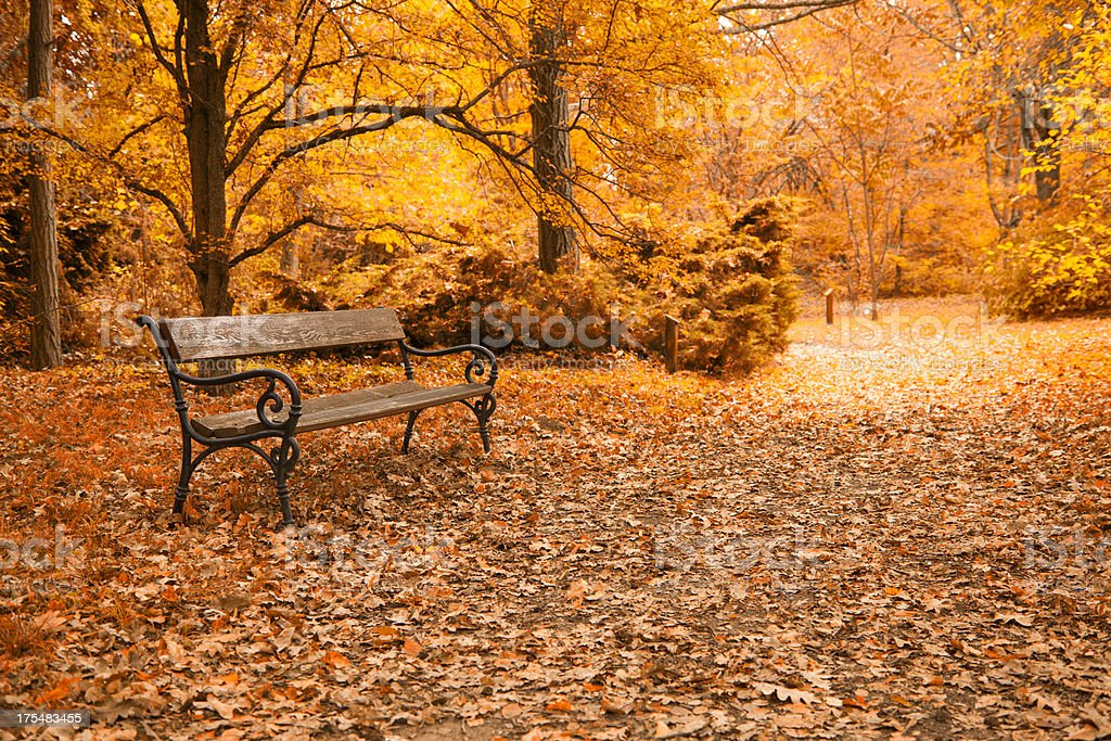 Autumn a park bench in Hungary royalty-free stock photo