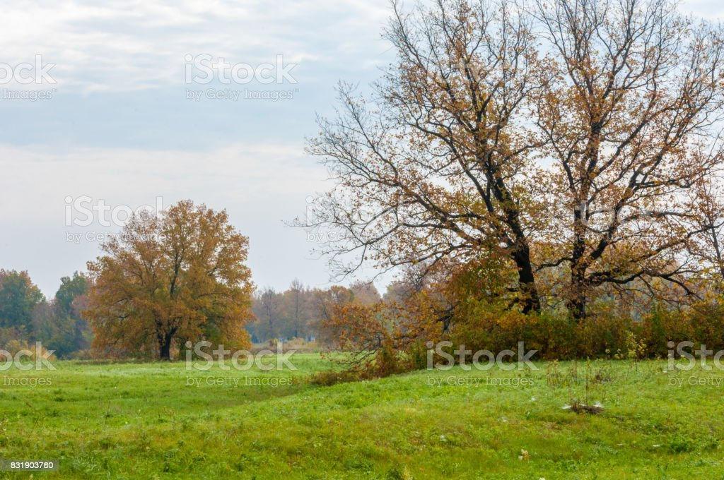 Autumn abandoned golf course stock photo