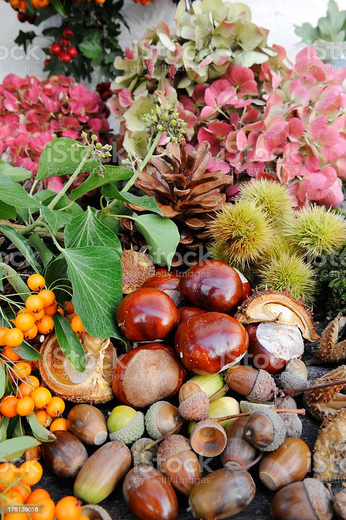 Autumn abundance royalty-free stock photo