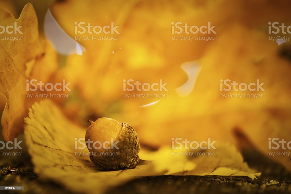 Autumn acorn and leaf macro stock photo