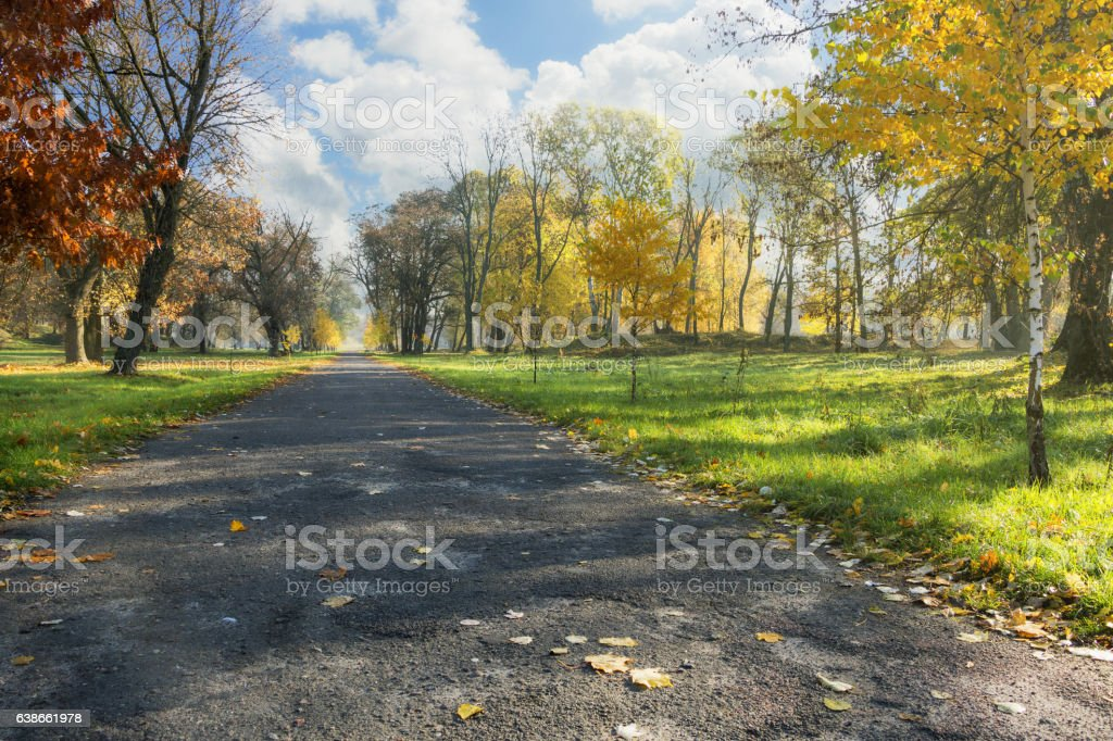 Autumn alley in a city park. stock photo