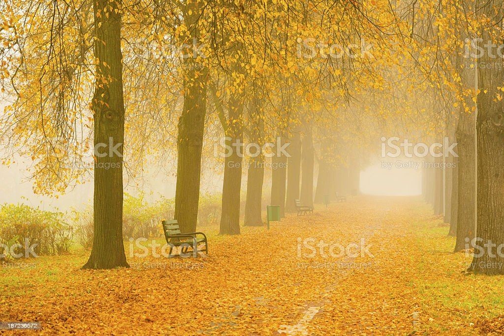 Autumn Alley in the Park - 36 Mpx royalty-free stock photo