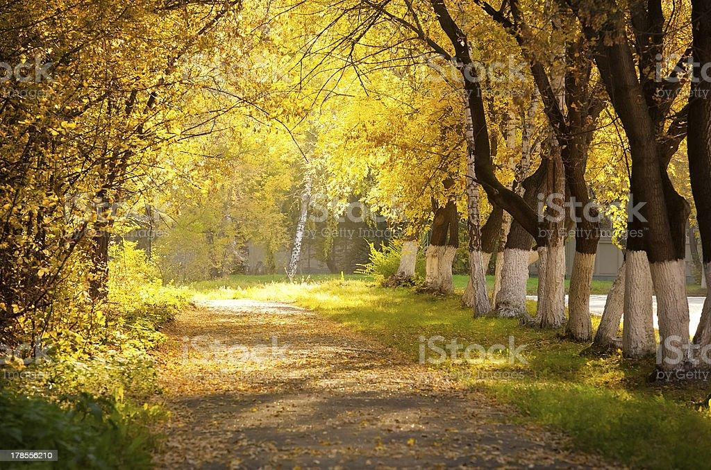 Autumn alley royalty-free stock photo