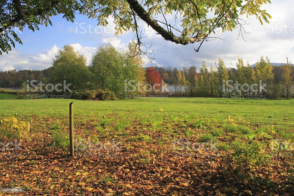 Autumn Along a River Pasture stock photo