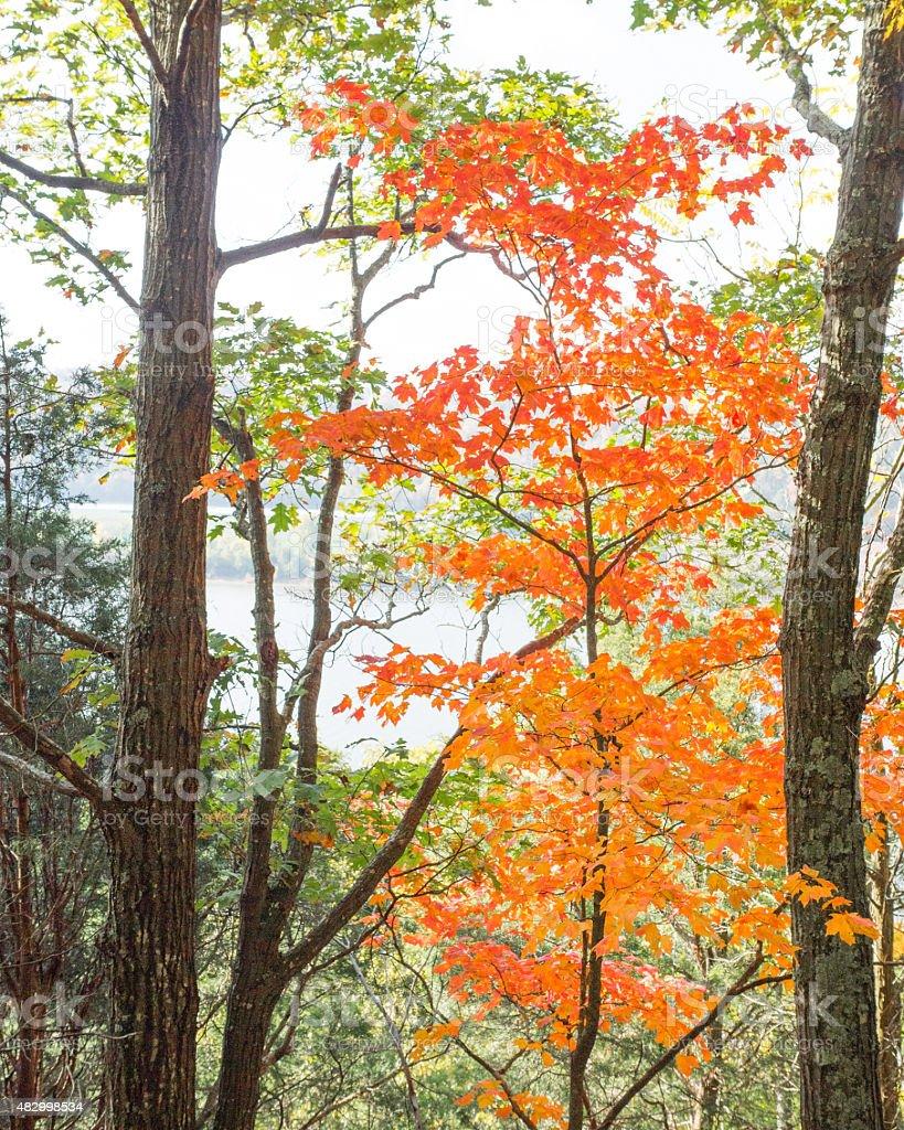Autumn Along The Ohio River stock photo