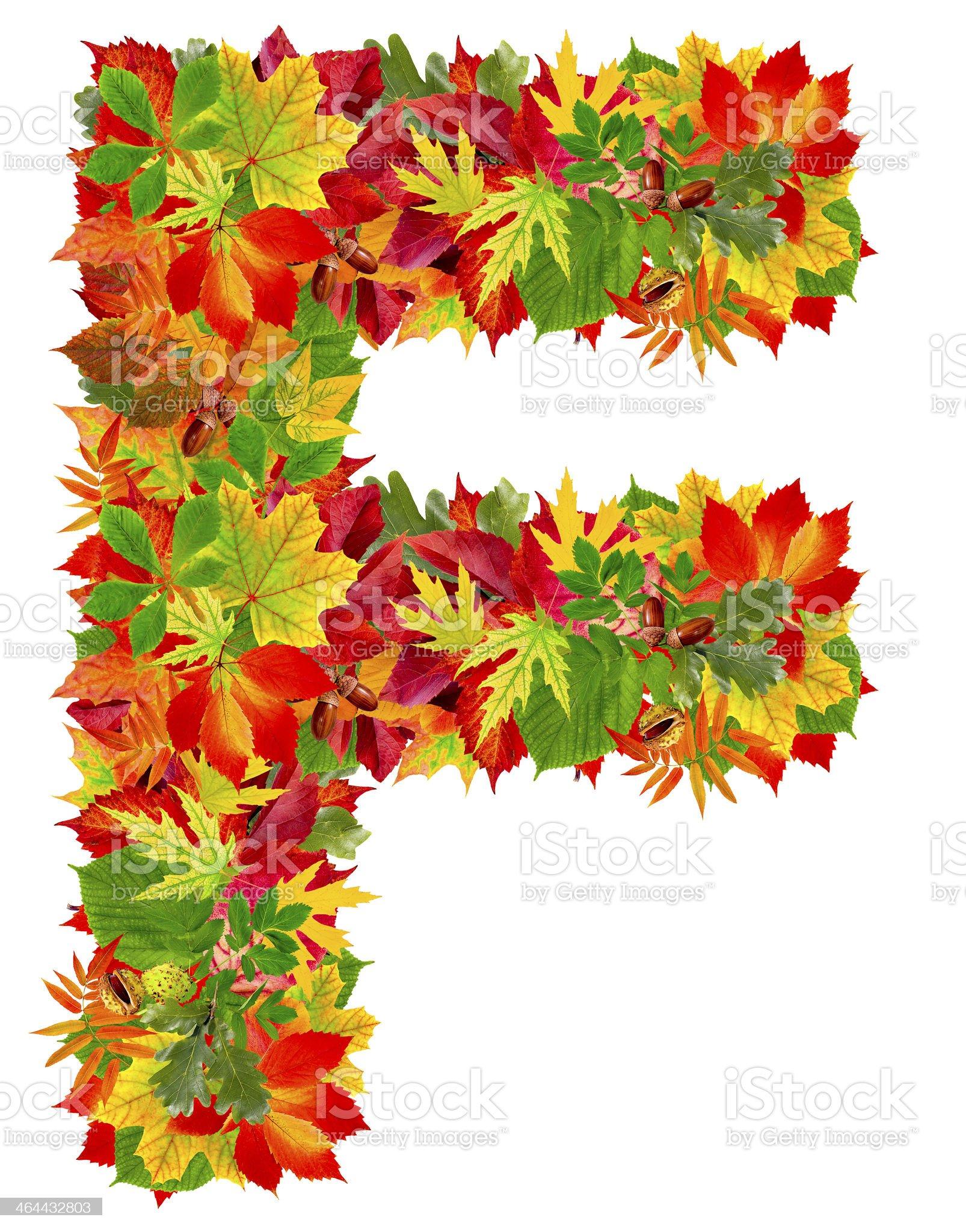 F, autumn alphabet isolated on white royalty-free stock photo