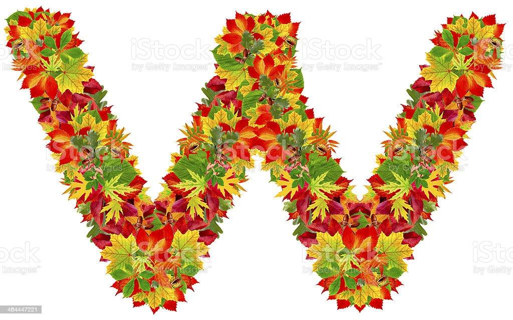 W, autumn alphabet royalty-free stock photo