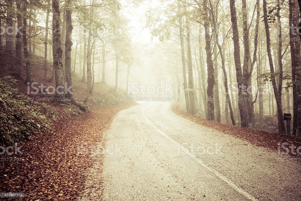 Autumn and Forest  with Street in the Fog royalty-free stock photo