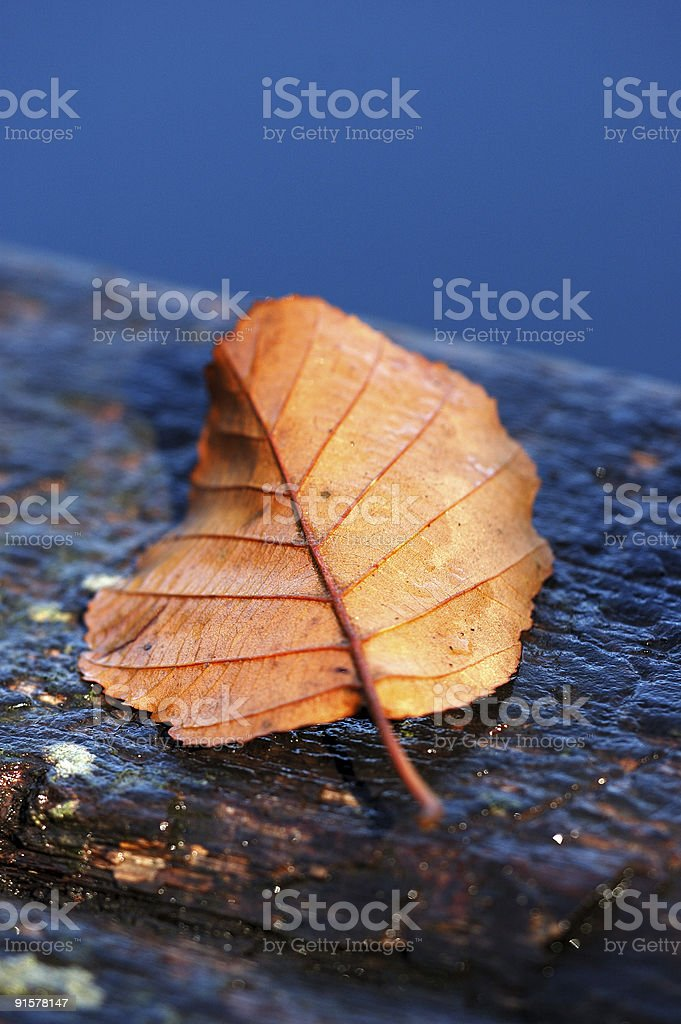 Autumn and Leaf royalty-free stock photo