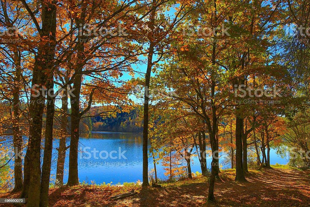Autumn and Nature stock photo
