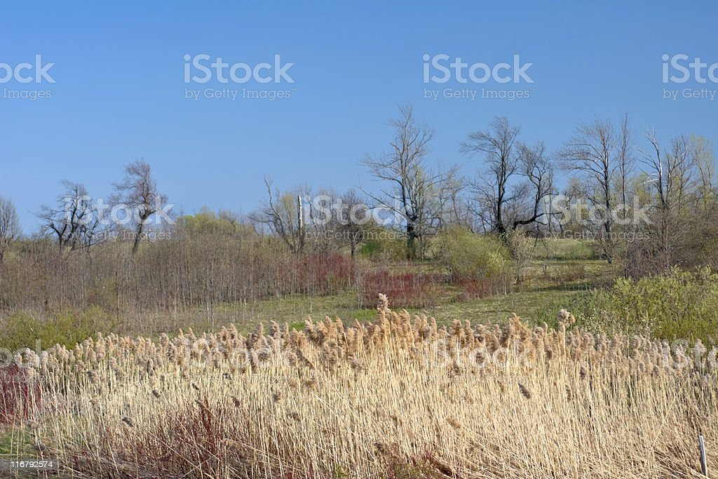 Autumn and Spring Together in a Field stock photo