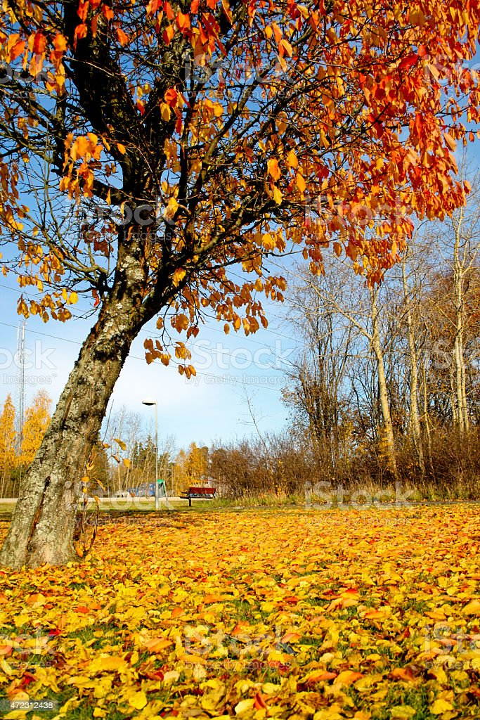Autumn and the yellow / orange leaves royalty-free stock photo