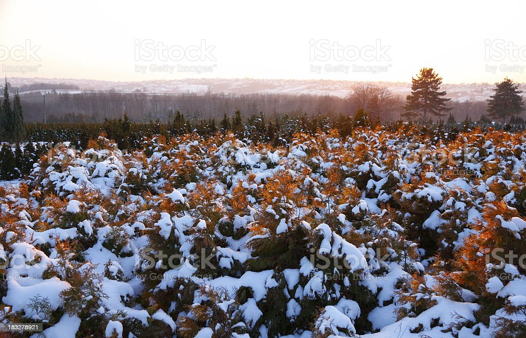 Autumn and Winter royalty-free stock photo