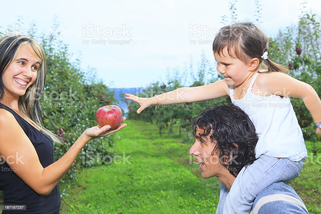 Autumn Apple - Give me royalty-free stock photo