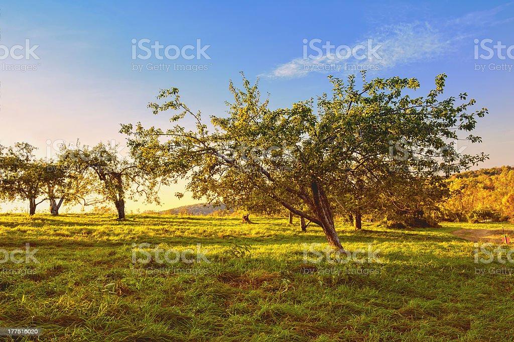 Autumn apple orchard HDR at dusk stock photo
