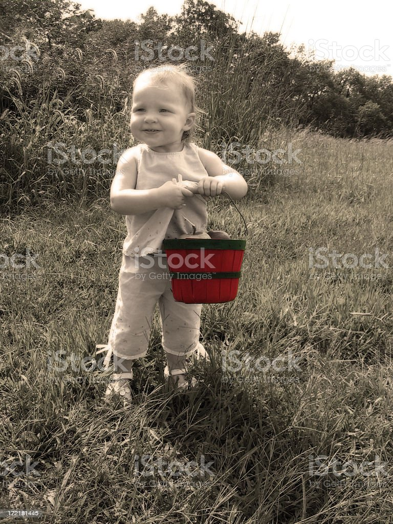 Autumn Apple Picking (Antiqued) stock photo