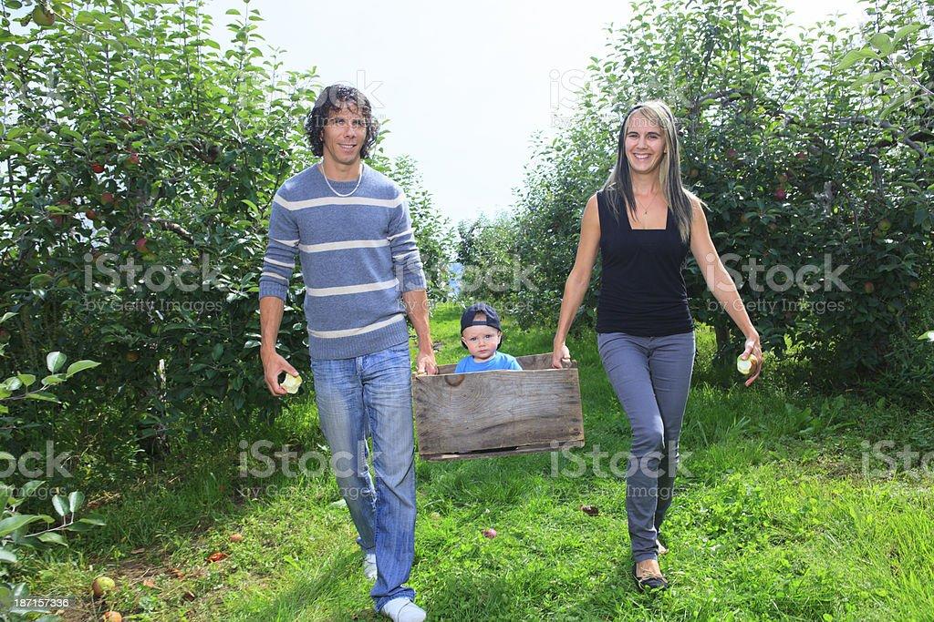 Autumn Apple - Walk With Box royalty-free stock photo