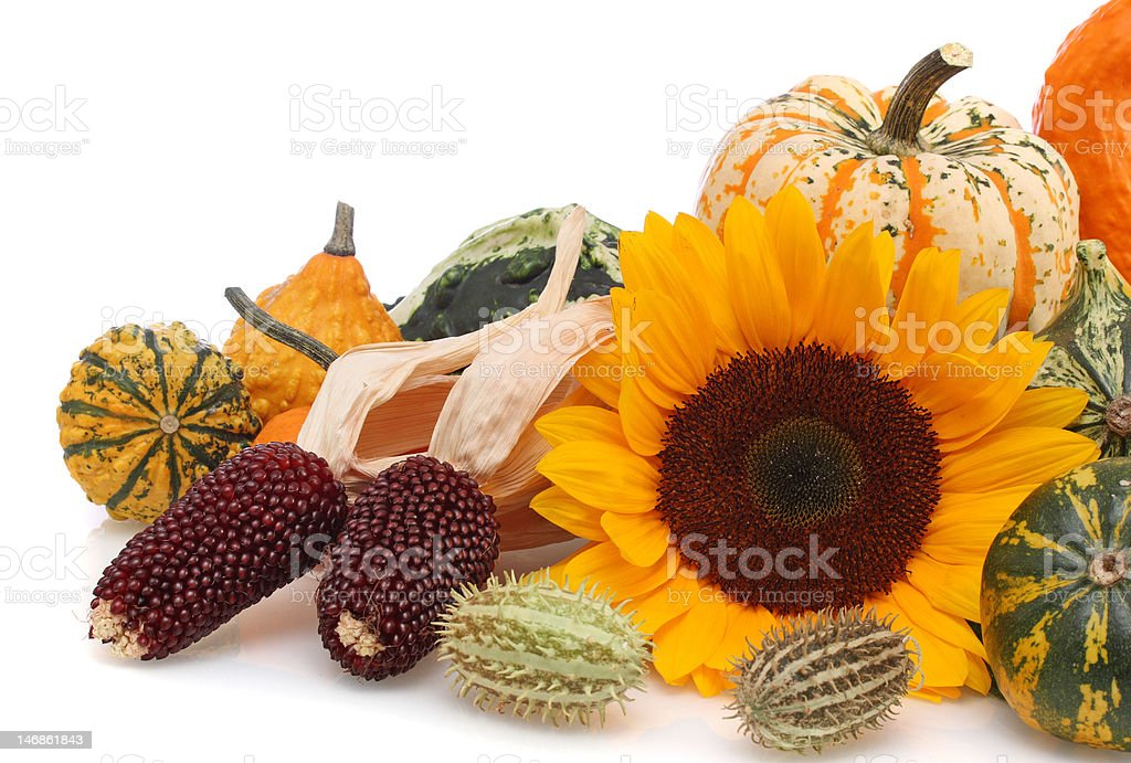 autumn arrangement royalty-free stock photo
