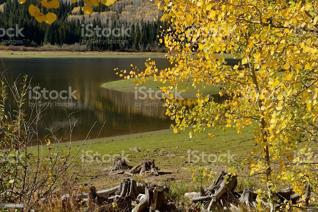 Autumn Aspen at Mountain Lake stock photo