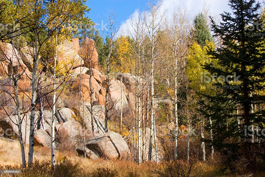 Autumn Aspen Leaves in Lovell Gulch Colorado stock photo