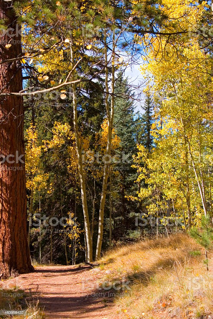 Autumn Aspen Leaves on the Lovell Gulch Trail stock photo