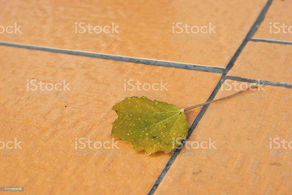 Autumn aspen on tile royalty-free stock photo