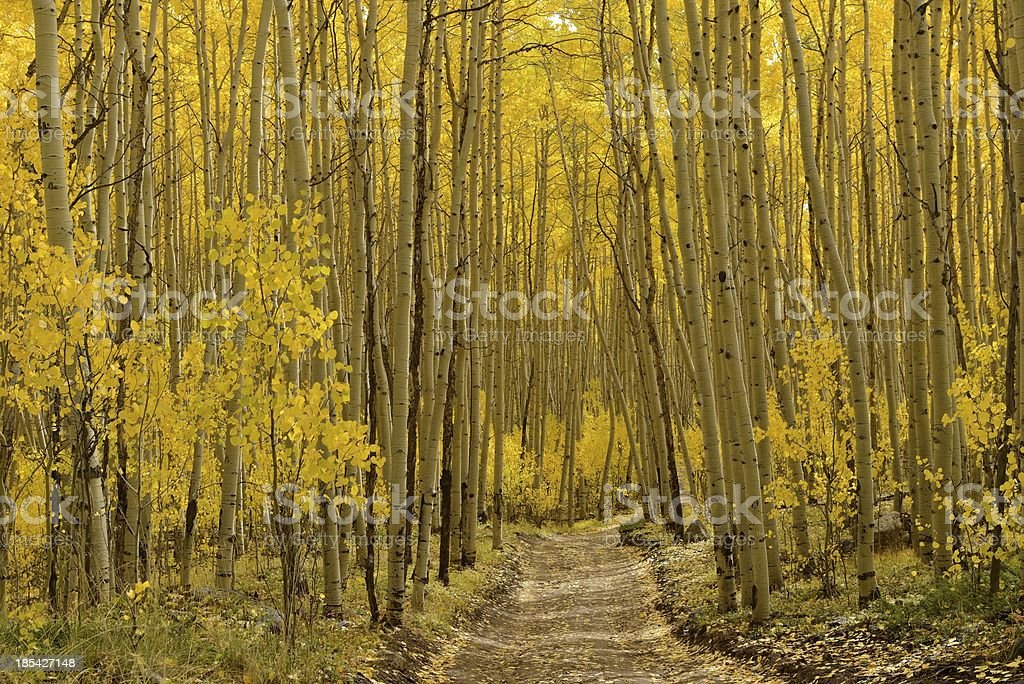 Autumn Aspen Trail - Horizontal stock photo