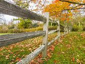 Autumn at a glance