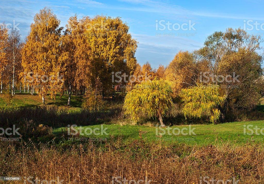 Autumn at a park royalty-free stock photo