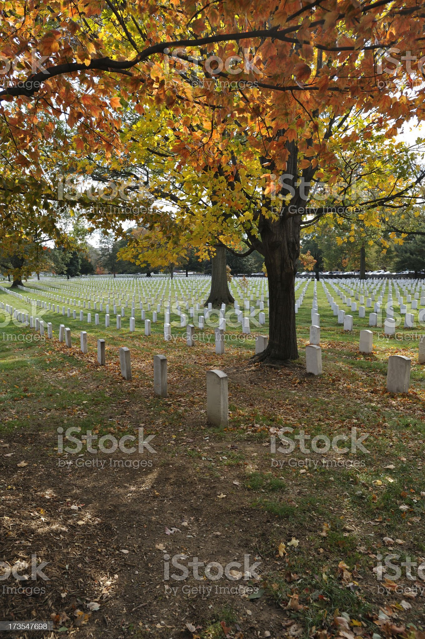 Autumn at Arlington National Cemetery Vertical royalty-free stock photo