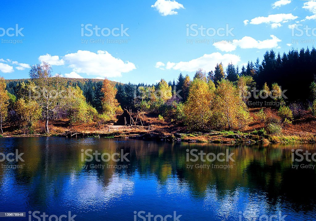 Autumn at Bashang royalty-free stock photo