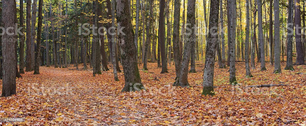 Autumn at Hartwick Pines State Park, Michigan stock photo