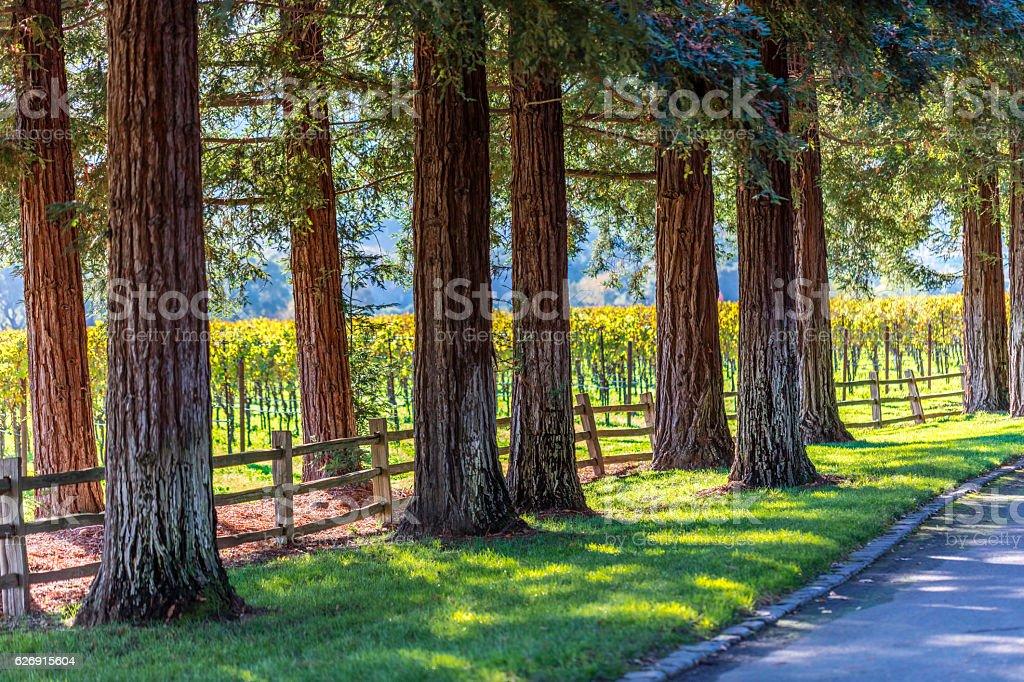 Autumn at Napa Valley, California stock photo