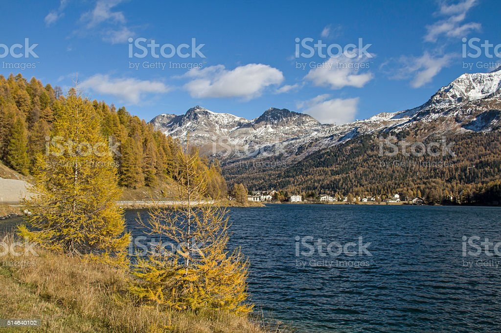 autumn at Sils lake stock photo
