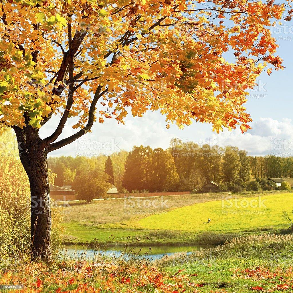 Autumn at the morning park stock photo