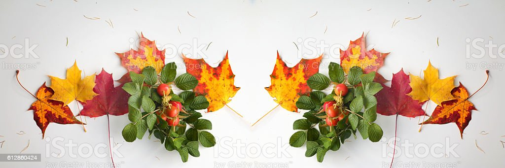 Autumn background - maple leaves, briar branch with berries stock photo