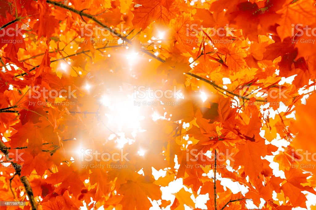 Beautiful colorful autumn background with maple leaves and sunlight stock photo