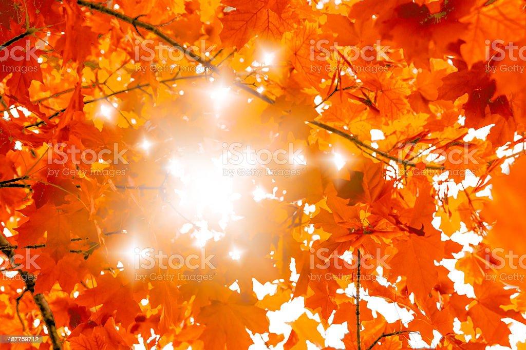 Autumn background with beautiful orange maple tree and sunlight stock photo