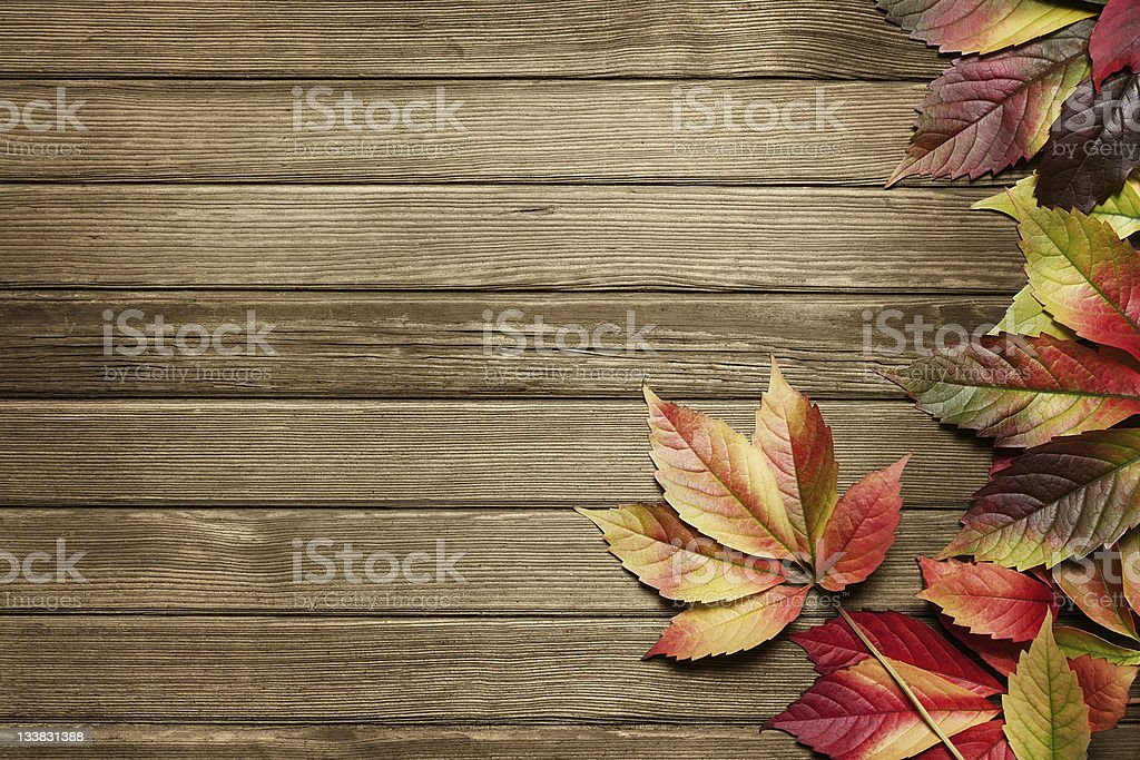 Autumn background with copy space royalty-free stock photo