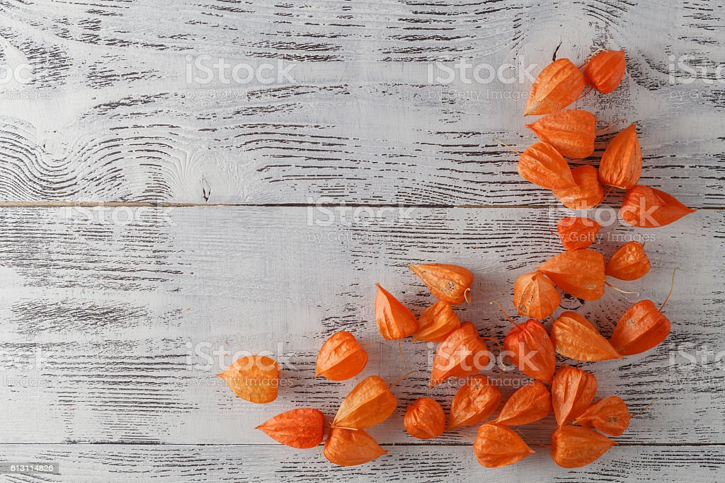 Autumn background with Delicate bright orange Physalis, also kno stock photo