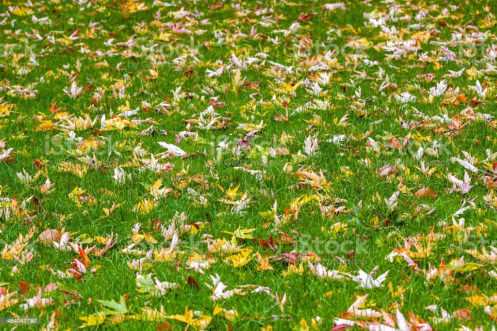 Autumn background with dry leaves on green grass, copy space stock photo