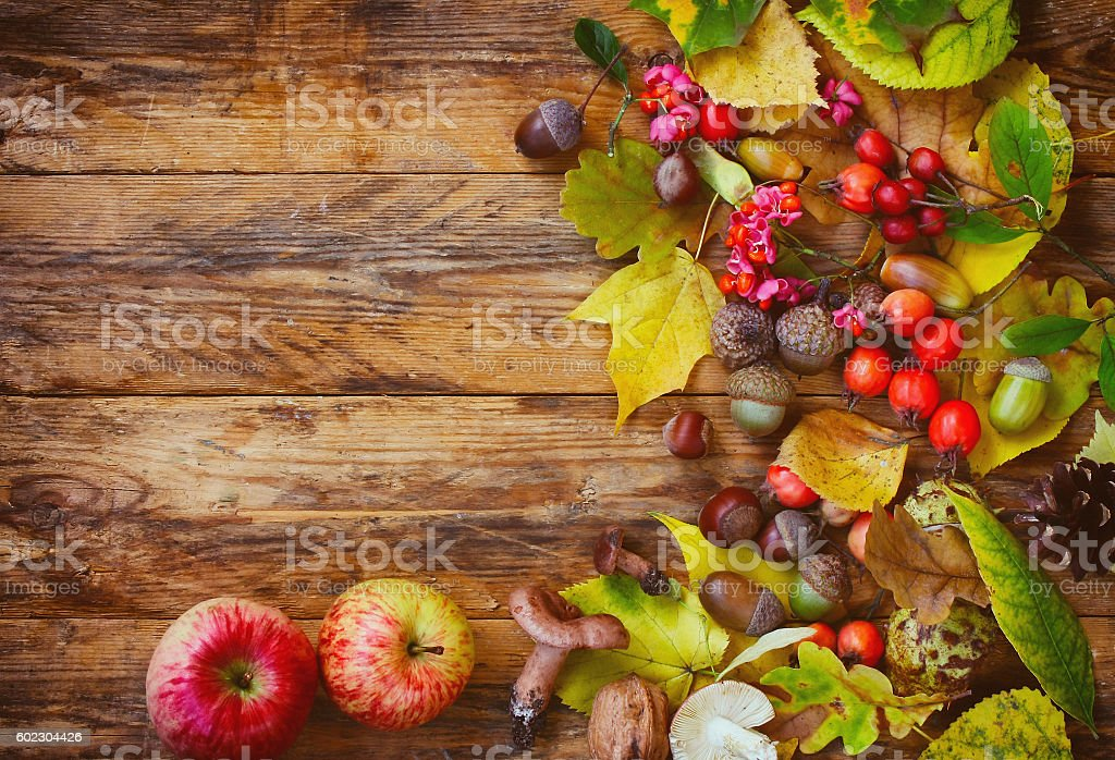 Autumn background with leaves, berries, apple and mushroom stock photo