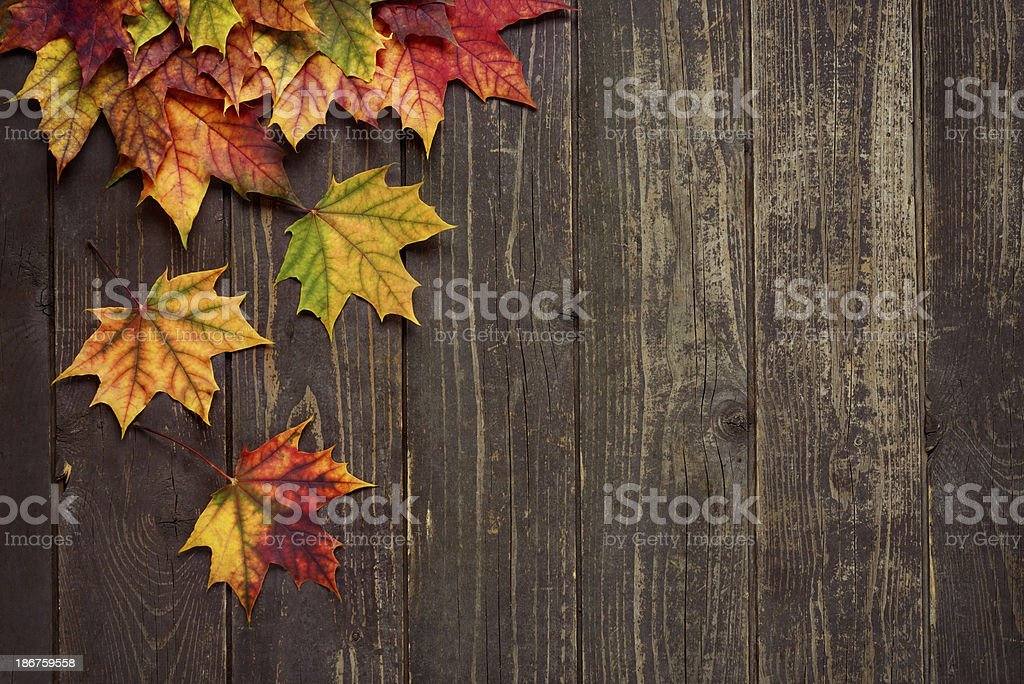 Autumn background with maple leaves on old woods royalty-free stock photo
