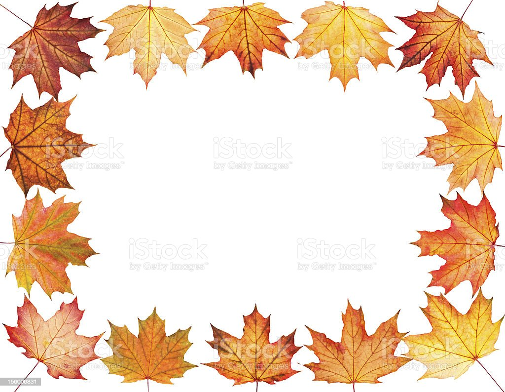 Autumn background with maple leaves royalty-free stock photo