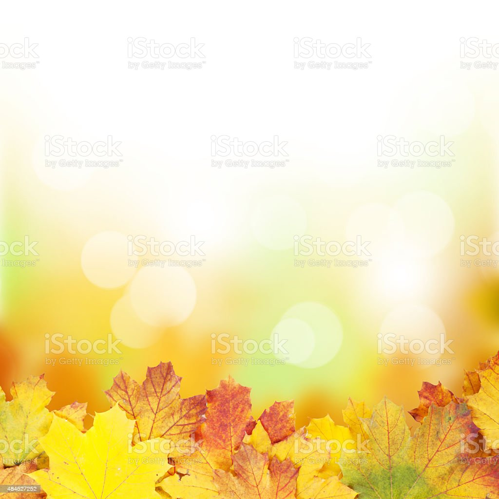 Autumn background with maple leaves stock photo