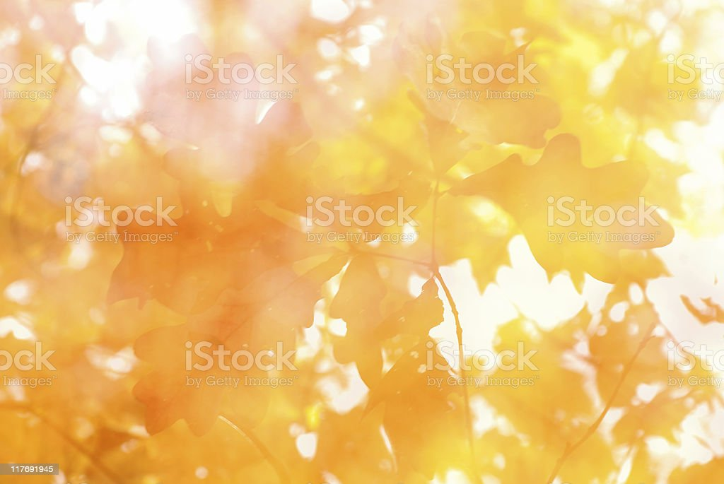 Autumn background with shades of orange and yellow leaves royalty-free stock photo