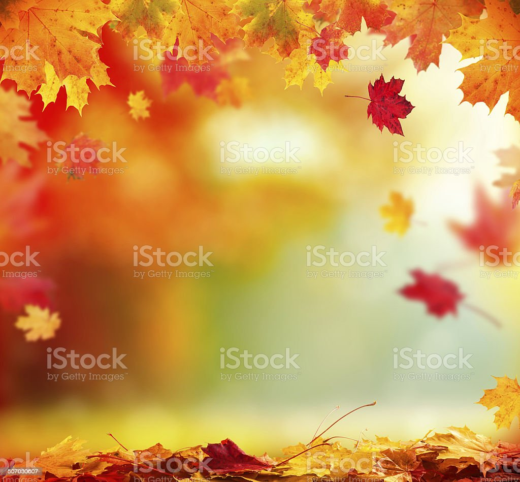 Autumn background with wooden planks stock photo