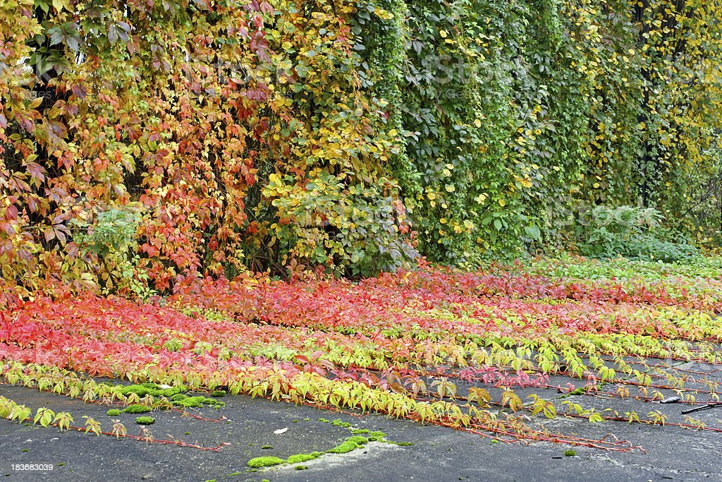 Autumn Backyard and Plants Leaves royalty-free stock photo