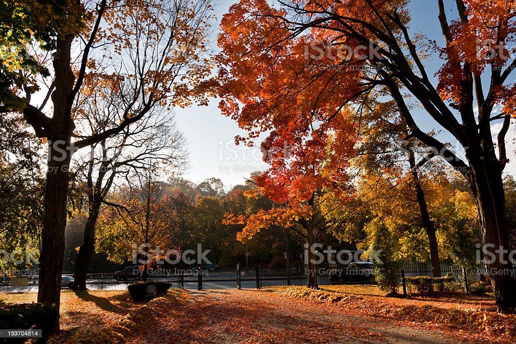 Autumn Backyard stock photo