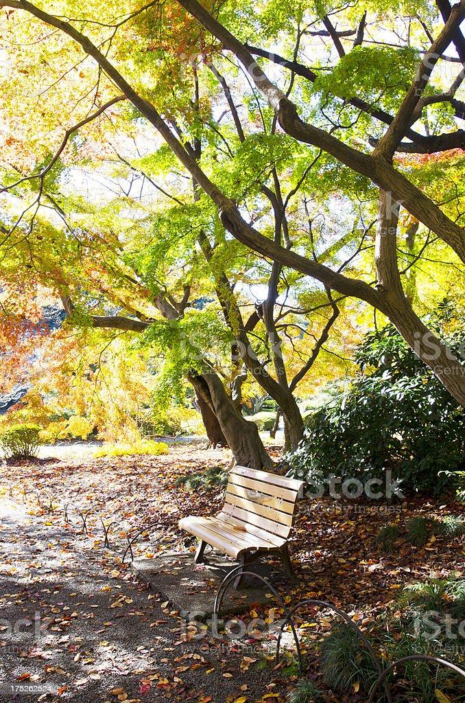 Autumn bench royalty-free stock photo